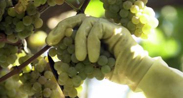 Tour por las denominaciones de origen de vinos de Galicia